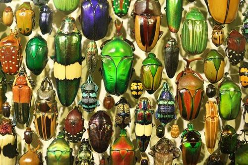 colectioneaza insecte pentru copii