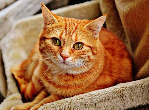 nume celebre pisici